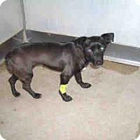 Adopt A Pet :: URGENT ON 1/21  San Bernardino - San Bernardino, CA