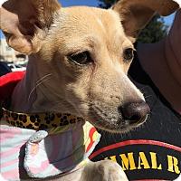 Adopt A Pet :: Nova - Oakley, CA