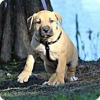 Adopt A Pet :: Queen - SOUTHINGTON, CT