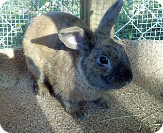 Dwarf Mix for adoption in Williston, Florida - Leo
