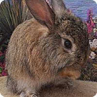 Adopt A Pet :: Fuzzbutt - Foster, RI