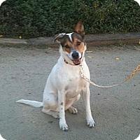 Adopt A Pet :: Perry - Newbury Park, CA