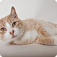 Adopt A Pet :: Buddha - Brooklyn, NY