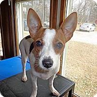 Adopt A Pet :: Sophia - Warrenton, NC