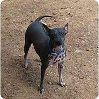 Adopt A Pet :: Jessica - Phoenix, AZ