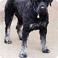 Adopt A Pet :: Boomer - Portland, OR