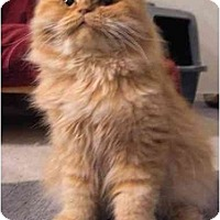 Adopt A Pet :: Ferdinand - Davis, CA