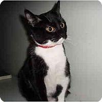 Adopt A Pet :: Christabelle - Hamburg, NY