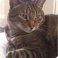Adopt A Pet :: Homer - Colmar, PA