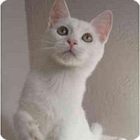 Adopt A Pet :: Skipper - Davis, CA