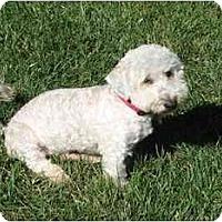 Adopt A Pet :: Marley the Mellow Fellow - La Costa, CA