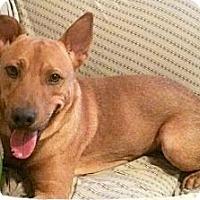 Adopt A Pet :: Trace - Scottsdale, AZ