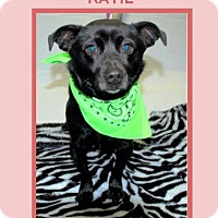 Adopt A Pet :: KATIE - Dallas, NC
