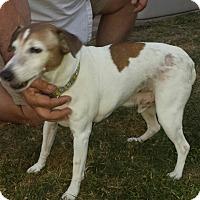 Adopt A Pet :: T.J.-senior needs a home! - Terra Ceia, FL