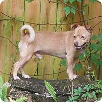Adopt A Pet :: Louie - Ormond Beach, FL