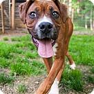 Adopt A Pet :: Barney - ADOPTION PENDING!!