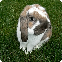 Adopt A Pet :: Toby - Conshohocken, PA