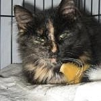 Adopt A Pet :: Carnie - Brainardsville, NY