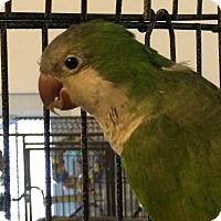Adopt A Pet :: Jeffrey - Punta Gorda, FL