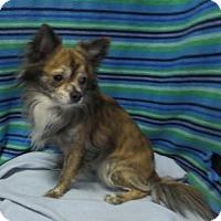 Adopt A Pet :: Toby - Mukwonago, WI