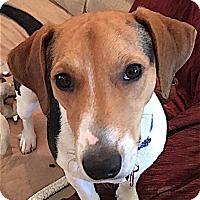 Adopt A Pet :: Eli - Houston, TX