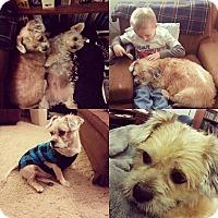 Adopt A Pet :: Chachi Turner - Urbana, OH