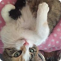 Adopt A Pet :: Jupiter - Ferndale, MI