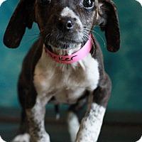 Adopt A Pet :: Parker - Waldorf, MD