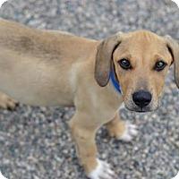 Adopt A Pet :: Huck - Fargo, ND