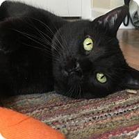 Adopt A Pet :: Glory Boo - Denver, CO