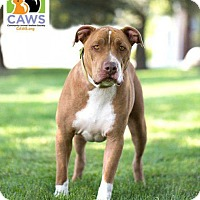 Adopt A Pet :: Bubba - Salt Lake City, UT