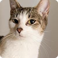Adopt A Pet :: Penny - Lowell, MA