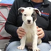 Adopt A Pet :: Oliver - Elyria, OH