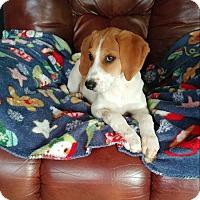 Adopt A Pet :: Molly - ADOPTION PENDING! - Hillsboro, IL