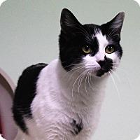 Adopt A Pet :: Phantom - Murphysboro, IL
