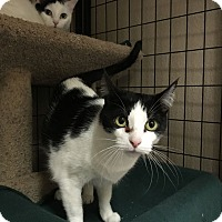Adopt A Pet :: Montreal - Fountain Hills, AZ