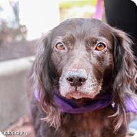 Adopt A Pet :: Suzanne - Washington, DC