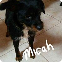 Adopt A Pet :: Micah - Palm Bay, FL