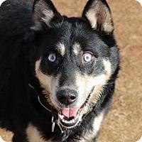 Adopt A Pet :: Mina - Bogart, GA