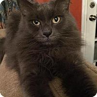Adopt A Pet :: Spike - Plainville, MA