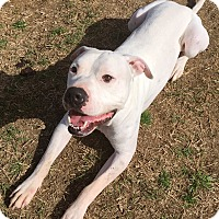 Adopt A Pet :: Jack - Watauga, TX