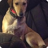 Adopt A Pet :: Rosie Bud *FOSTER* - Appleton, WI