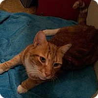 Adopt A Pet :: Garfield - Richmond, VA