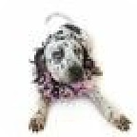 Adopt A Pet :: Cocoa - Tampa, FL