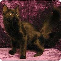 Adopt A Pet :: Lacy - Sacramento, CA