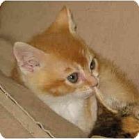 Adopt A Pet :: Percy - Davis, CA