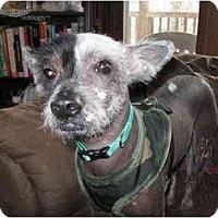 Adopt A Pet :: Harry (MD) - Gilford, NH