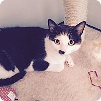 Adopt A Pet :: Dunkin - Richmond, VA