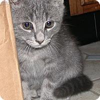 Adopt A Pet :: Stormy - Kirkwood, DE