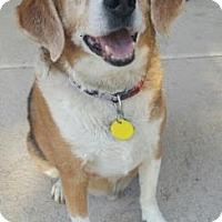 Adopt A Pet :: Clemence - Scottsdale, AZ
